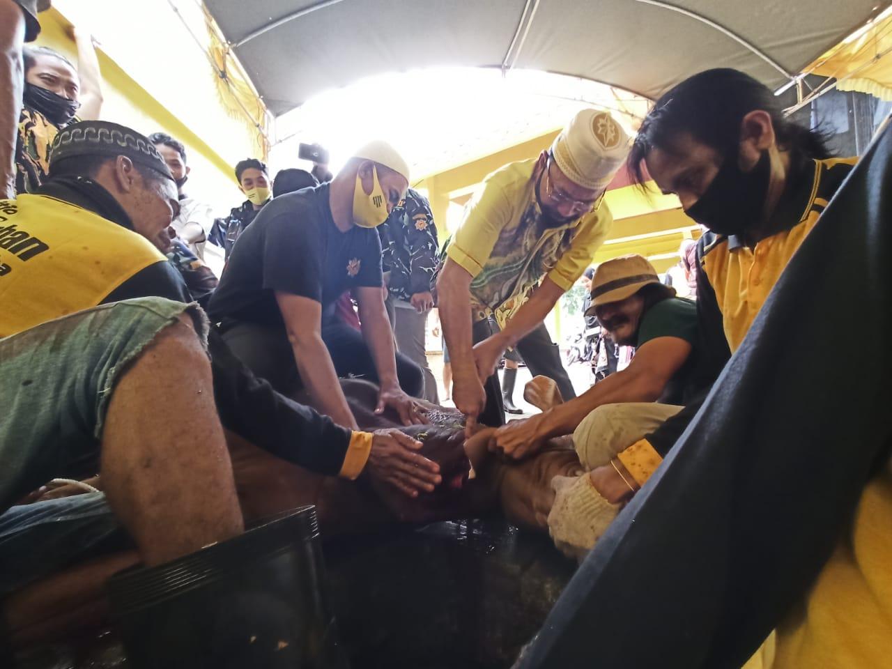 Potong 13 Ekor Sapi, Golkar Kalsel Bagikan 1200 Paket Daging Door To Door Ke Masyarakat