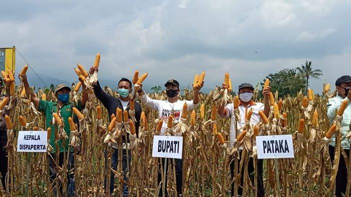 Amankan Kebutuhan Industri dan Pakan Ternak, Bupati Wihaji Ajak Petani Batang Tingkatkan Produktivitas Jagung