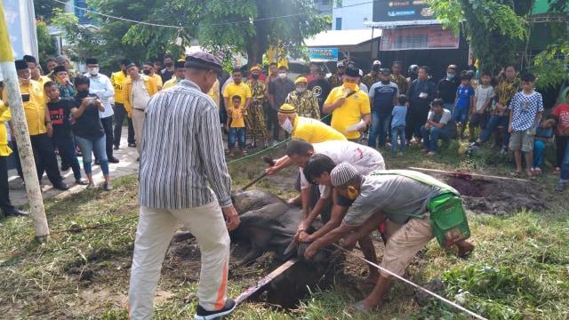 Golkar Sumut Sembelih 11 Sapi dan 5 Kambing di Lapangan Sejati Medan