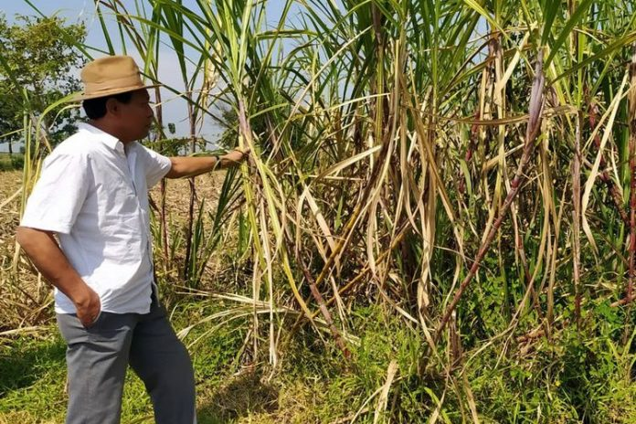 Mukhtarudin Bantah Anggapan Permenperin 03/2021 Bakal Sengsarakan Petani Tebu