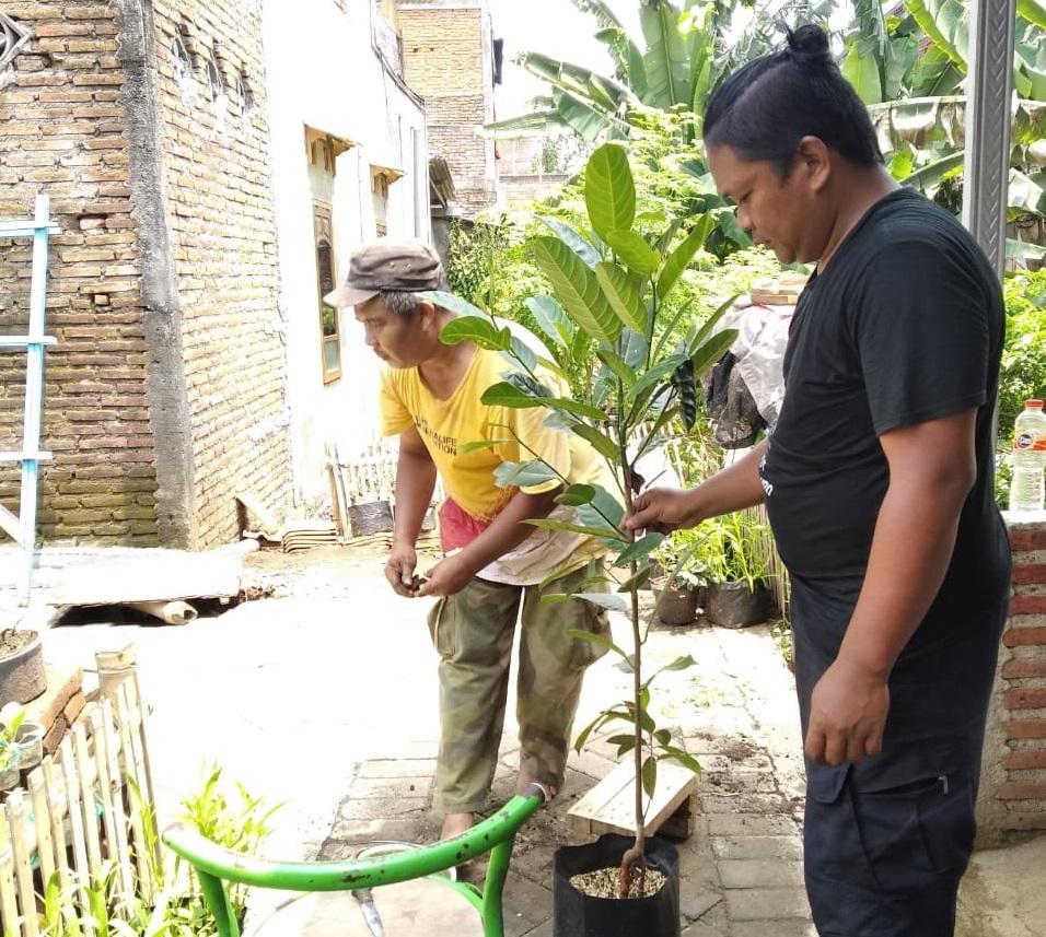 Hari Menanam Pohon, Ketua Karang Taruna Kota Malang, Suryadi Bagikan Bibit Buah Produktif