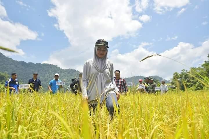 Bupati Cantik Ini Borong Panen Raya Petani, Dibagikan ke Warga Luwu Utara Terdampak Corona
